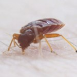 best-boston-bed-bug-removal