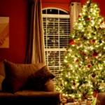 holiday-pest-control-boston