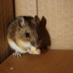 boston-commercial-pest-removal-service