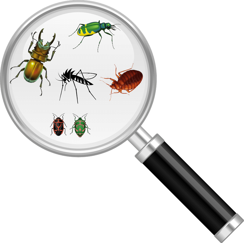 bug-magnify-glass | NW Pest Control