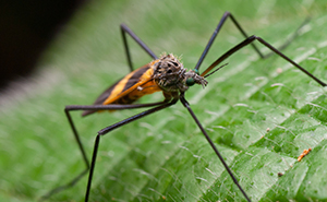 Mosquito Control | Residential Pest Control | NW Pest Control