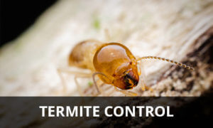 Termite Control | Residential Pest Control | NW Pest Control