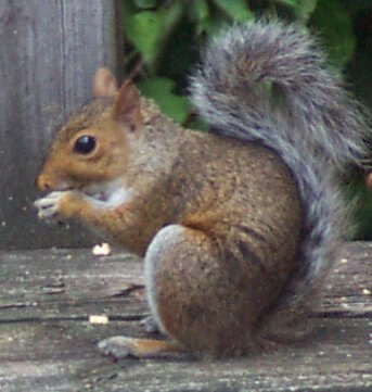 Wildlife & Squirrel Control | Residential & Commercial Pest Control | NW Pest Control